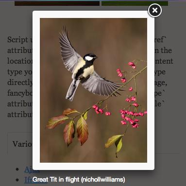 Lightbox 風に画像や動画をオーバレイ表示できるjQueryプラグイン「Fancybox」